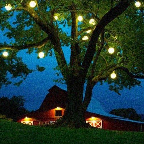 Waterproof Multicolor Led Sphere Light 3 24 Dia 6 D In 2021 Outdoor Tree Lighting Solar Tree Lights Tree Lighting