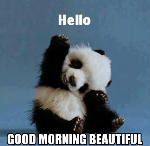 Beautiful Good Morning Memes Jpg 499 485 Its Friday Quotes Happy Friday Quotes Friday Meme
