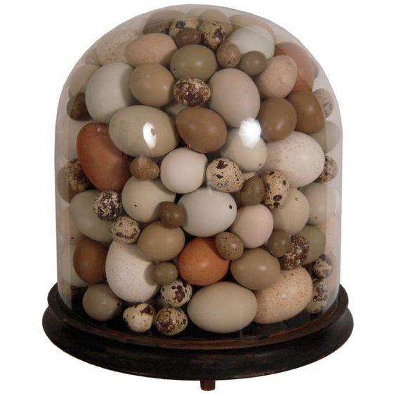 Birds Egg Collection in Bell Jar | Cabinet de curiosités | Pinterest ...