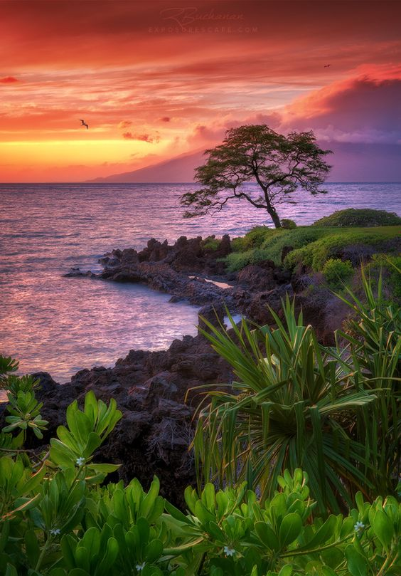 *Best on Black* Arriving in Wailea—on the southwestern coast of Maui