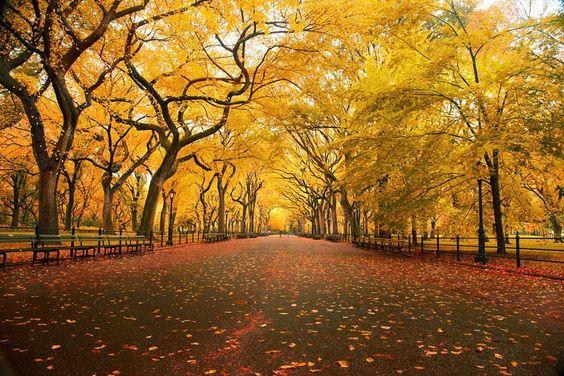 Una bellissima gallery dedicata all'autunno. Condividete i colori splendidi di questa stagione con i vostri amici!