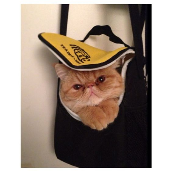 bag cat, reminds me of Tigerlily trying to sneak in my backpack.