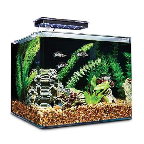 Imagitarium Frameless Freshwater Aquarium Kit 6 8 Gal Petco In 2020 Aquarium Kit Freshwater Aquarium Freshwater Aquarium Plants
