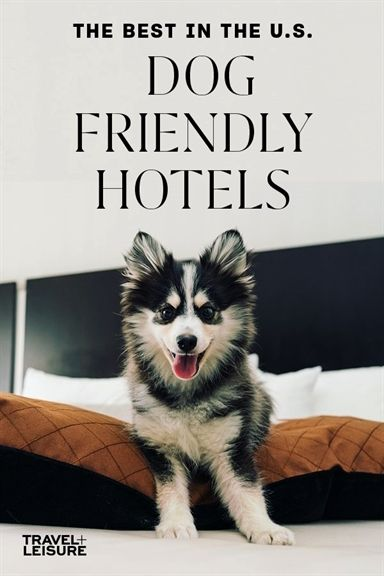 Everything You Need To Know About Hotels Dog Friendly Hotels Dog Friends Dog Hotel