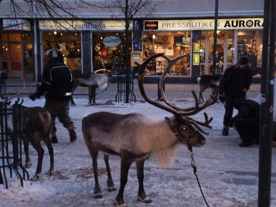 Luleå - la Tundra