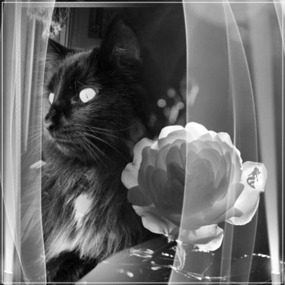 El gato y la flor