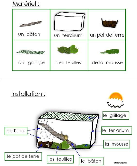 Escargots et langages en maternelle, petite moyenne et grande sections