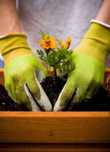 Gardener's Hands 101: Protection & Cleaning Tips
