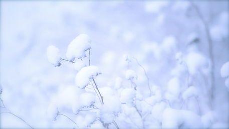 'Snow softness' von Päivi Vikström bei http://www.artflakes.com/de/products/snow-softness