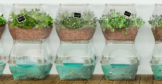 Aquaponics is growing in popularity as a versatile method of growing nutritious vegetables while raising fish, combining hydroponic gardening with aquaculture. These systems can be built to fit almost any location, indoors or outdoors, and can be designed for almost any crop or edible fish.  http://eatlocalgrown.com/article/14585-5-amazingly-simple-aquaponics-systems.html