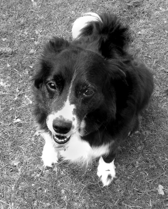 Goose (July 2, 2005 - March 24, 2014)