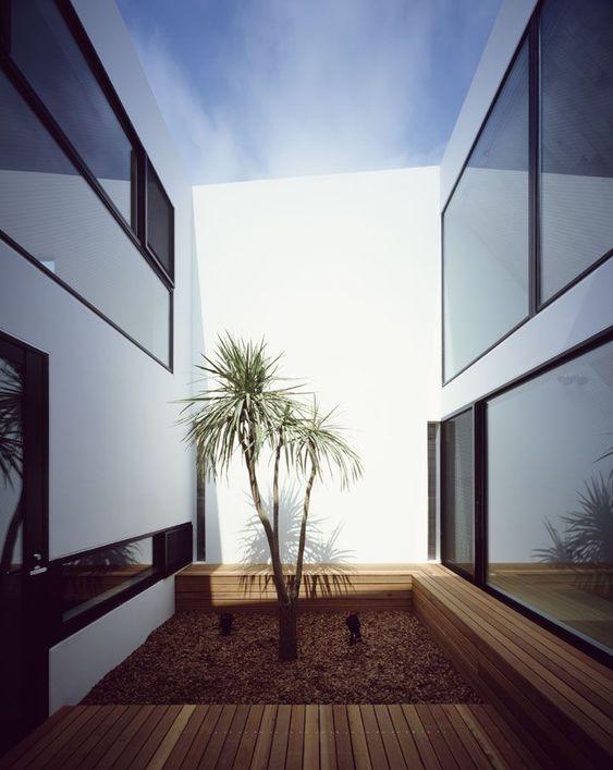 Cour intérieure avec palmiers