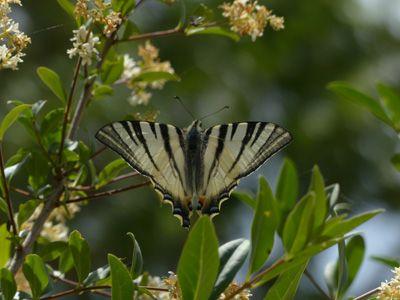 Zum Schluss kam Schmetterling, um mich zu belohnen.