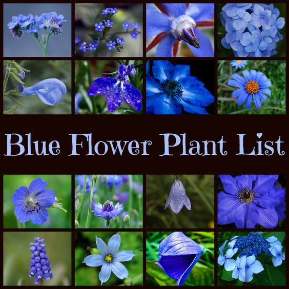 Blue Garden Plants |  For seed giveaways, daily tips and plant info, come join us on facebook! https://www.facebook.com/thegardengeeks