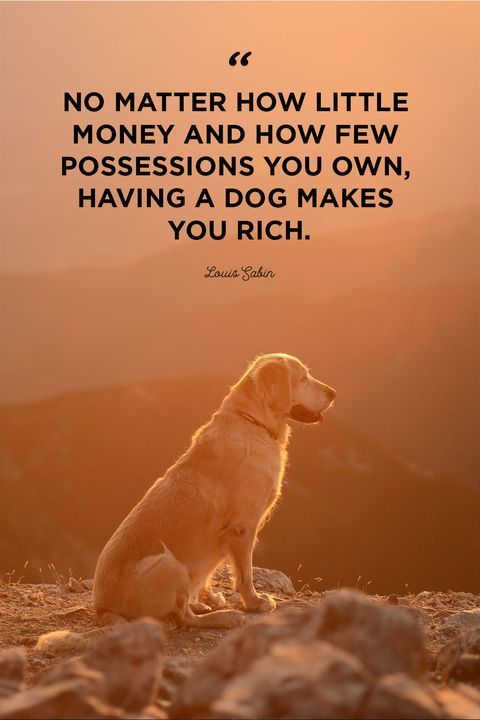 Imgur Com Best Dog Quotes Dog Quotes Love Dog Best Friend Quotes