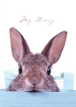 Sneaky Bunny