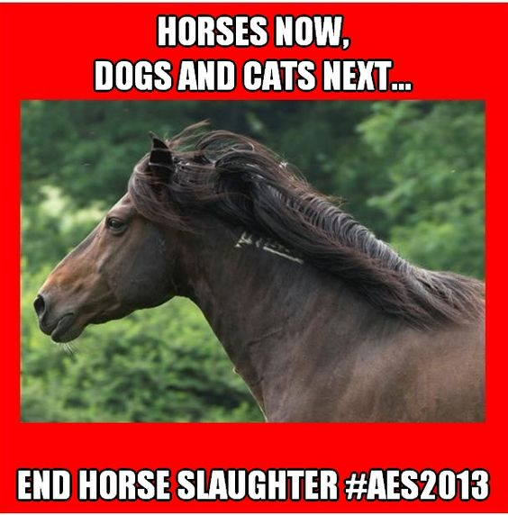 http://www.equineadvocates.org/news.php?recordID=65