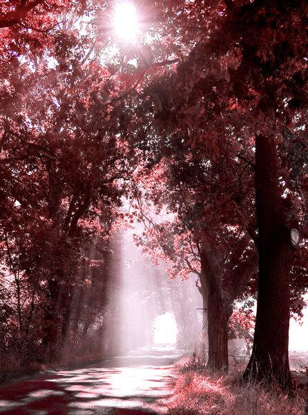 Forest Scenery with Sunbeams filtered through the tree leaves: