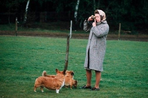 25 Awesome Photos Of The Queen And The Royal Corgis Reine Elisabeth Ii Elisabeth Ii Elisabeth