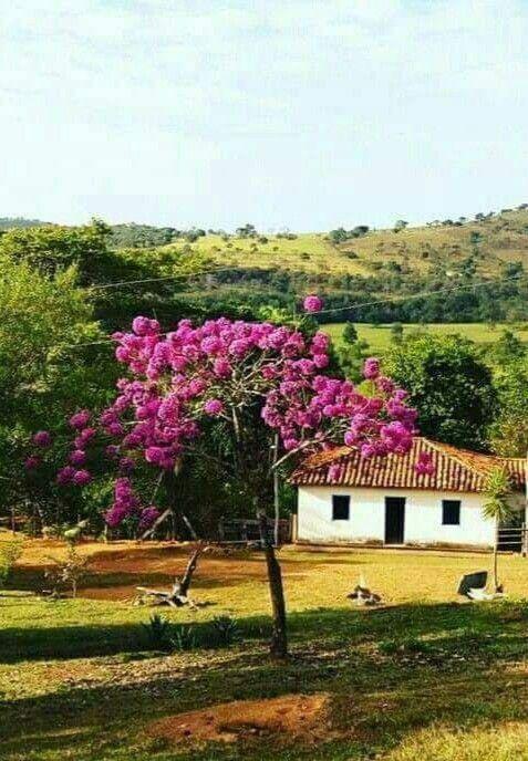 Ipe Serra Da Canastra Minas Gerais Brasil Gcm Com Imagens