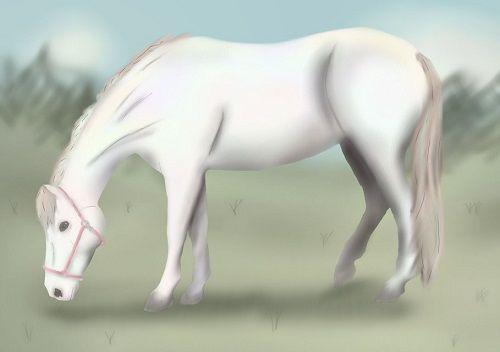 cozmina-laiduntaa