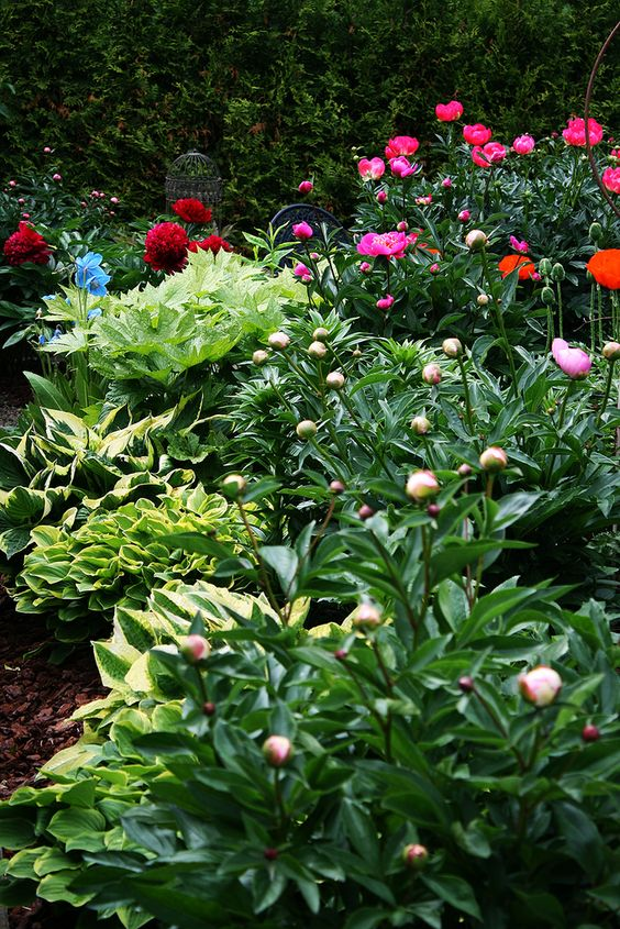 https://flic.kr/p/eSNHu2 | Garden View/ Peonies / Hosta/