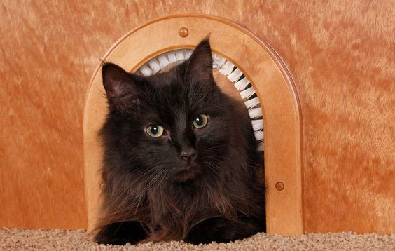 Need some Christmas present ideas for your cat? Here are our top picks.