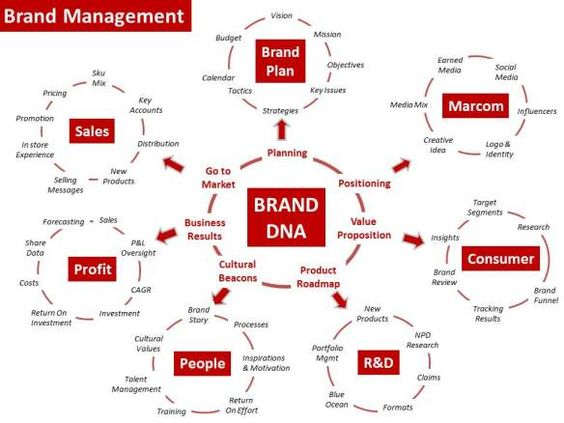 Brand Management Circles And Dna On