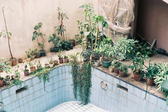 Pool plants pools and swimming on pinterest for Repurposed swimming pool