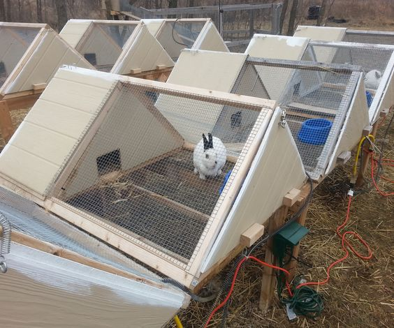 Super great a frame rabbit hutch guinea pigs design for Diy guinea pig cage designs
