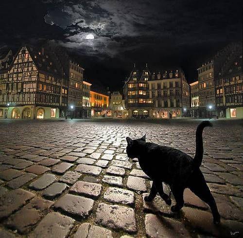 石畳を歩く野良猫)