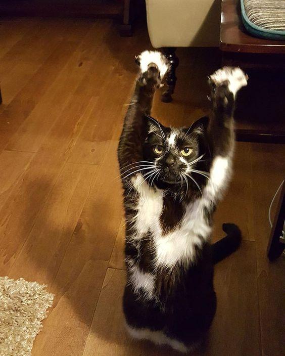 standing-cat-keys-goal-kitty-4: