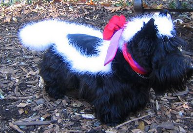 Costumes for Scottish Terriers | Scottish Terrier and Dog News (my question is, how did you manage not to be murdered by your Scottie when putting this on?)