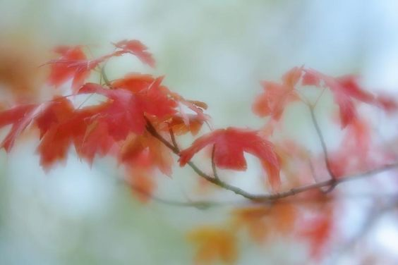 Early Autumn © Diane Alexander 2016 (Dragon Wing Images). Prints, cards, pillows, tote bags and more for sale.