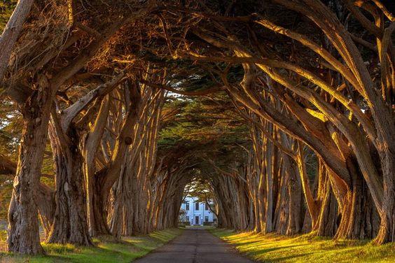 Prachtige straat met bomen en perfecte lichtval / tree's
