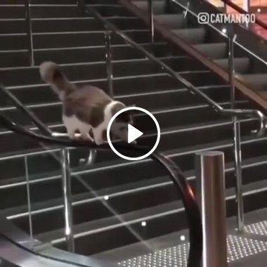 Gato fazendo uma longa caminhada na lateral  de uma escada rolante