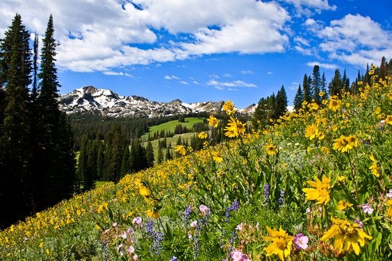 Wildflowers in the Gros Ventre Backcountry of Wyoming - near Turquoise Lake