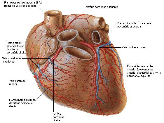 Sistema Arterial Sistema Arterial Arterias Coronarias Coronarias
