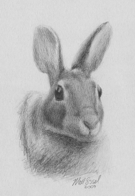 Rabbit Drawing | Rabbit Head Drawing | Ink inspirations ...