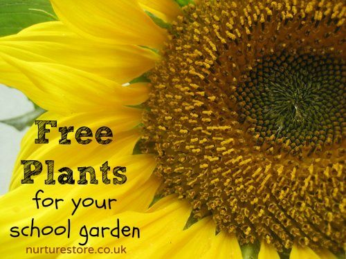 Free plants for your school (or home) garden