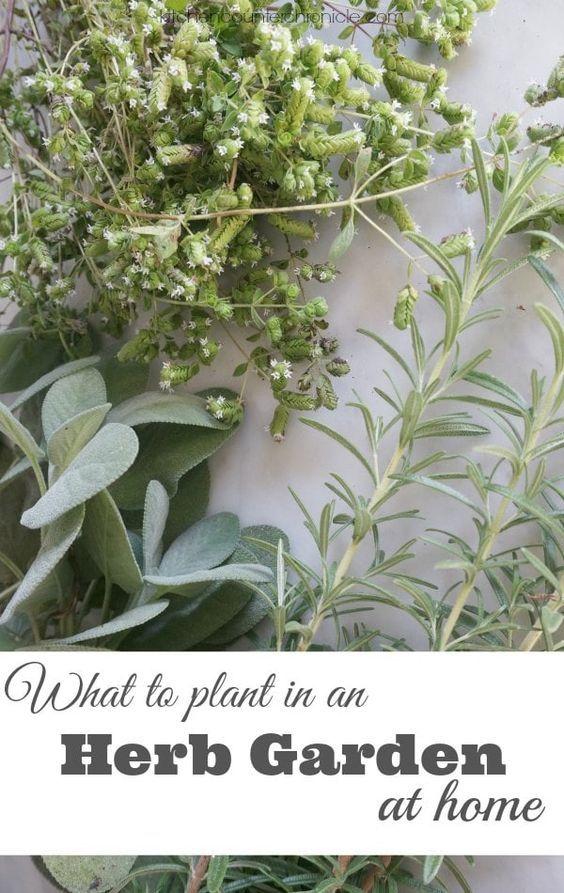 What To Plant In An Herb Garden At Home Gardens Home And We