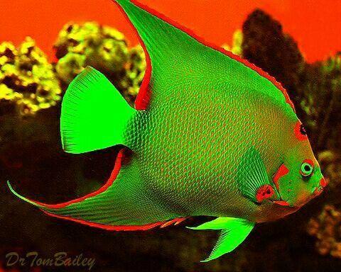 Tropical Fish Online Beautiful Sea Creatures Angel Fish Marine Fish