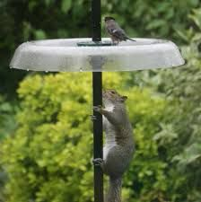Image result for squirrel proof bird feeder on a pole