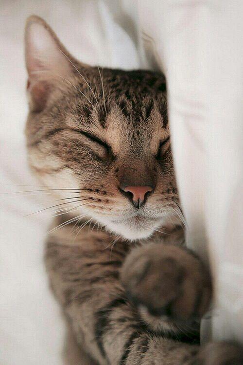 Image About Cute In Peacenlove By Linda Warme Susse Katzen Schlafende Katze Lustige Katzen