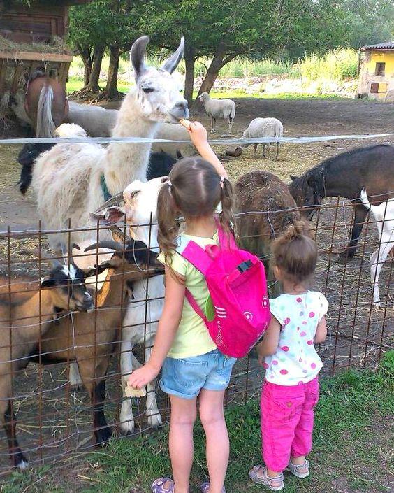 Apolenka - a mini zoo for kids and a horse rehabilitation nearby Pardubice, CZ