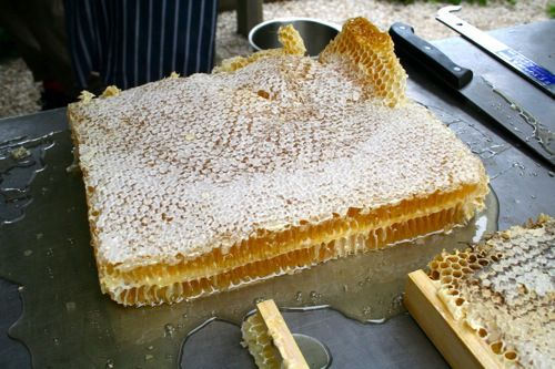warre_honeycomb_03--How to harvest honeycomb