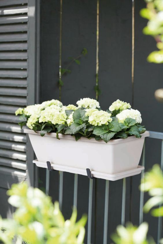 a nice hortensia in an elho barcelona planter #elho #pot ...
