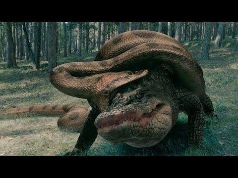 Panico No Lago Projeto Anaconda Filme Completo Dublado Youtube