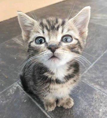 Si te estoy poniendo atención!!!!!!!!!
