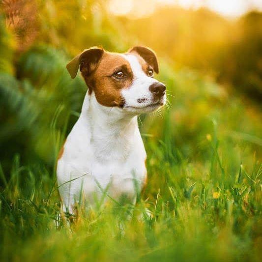 Anna Panke Photography On Instagram Samstag Schneeschauer Heute 19 Grad Fruhling In Deutschla In 2020 Hundefotografie Hund Portraits Tiere